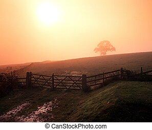 Misty morning, England, UK.