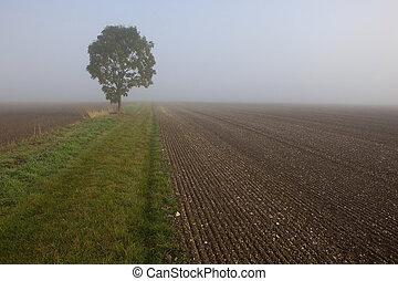 misty morning fields
