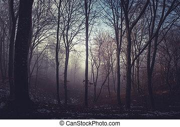 Misty morning in a dark autumn forest