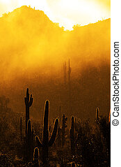 Misty Morning in Desert with Cactus Cacti in Arizona with Raindrops