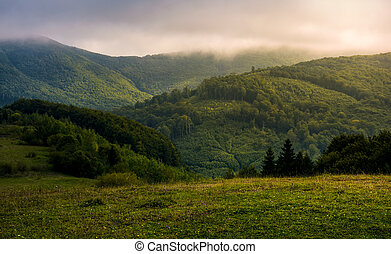 misty morning in green mountains. beautiful nature scenery...