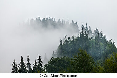 Misty morning in the Carpathians. The Ukraine
