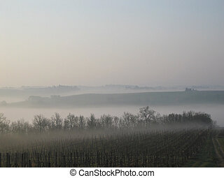 Misty morning in the vineyard