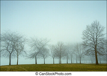misty morning light - xxx