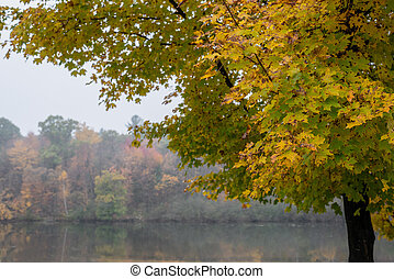 misty morning on lake in Autumn