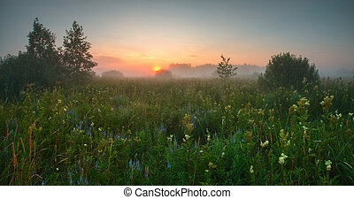Misty morning on spring meadow