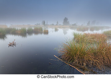 misty morning on wild lake