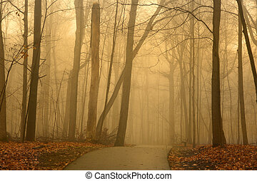 Misty morning - Alley in the park on misty morning