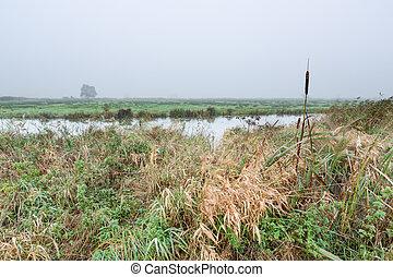 Misty morning rural landscape in the Netherlands