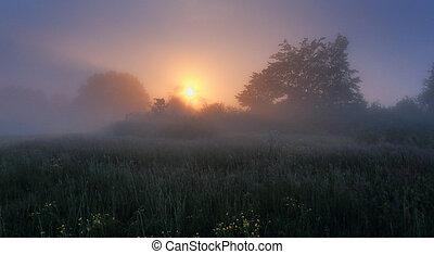 Misty morning scene