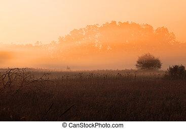 Misty morning - Misty autumn morning with sun rise