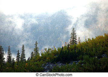 Misty Mountain Forest With Lake in Background