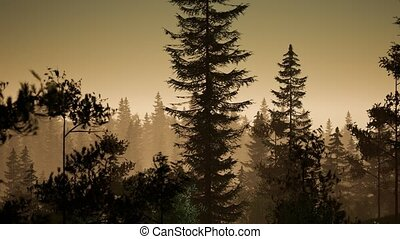 misty nordic forest in early morning with fog