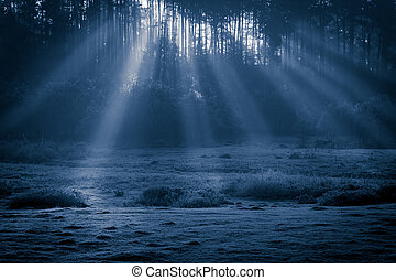 Misty old foggy forest at moonlight