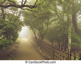 misty pathway - atmospheric way toward the light in misty...