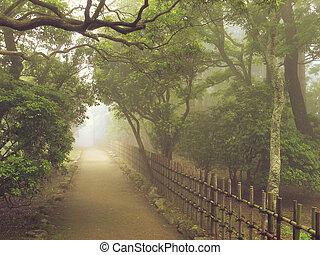 misty pathway - atmospheric way toward the light in misty...