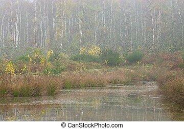 Misty Pond 1
