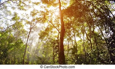 Misty rain forest and rays of sun. Psychedelic tropical ...