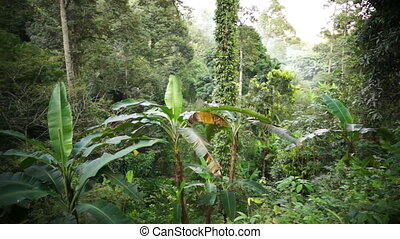 Misty rainforest, Malaysia. - Panoramic sweep of rainforest...