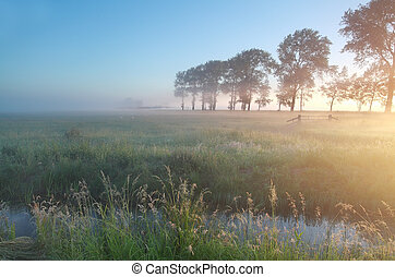 misty sheep pasture at sunrise