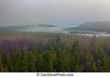 Misty spring morning forest and lake in may -...