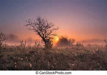 Misty spring sunrise