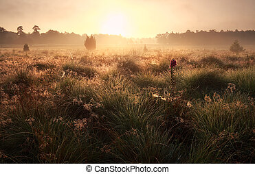 summer sunrise on meadow