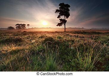 misty summer sunrise on meadow