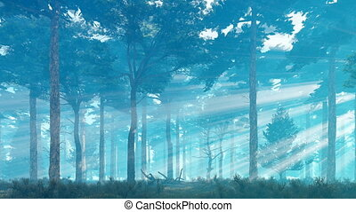 Misty sun rays in pine forest