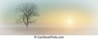 Misty Sunrise - A misty sunrise with tree