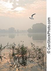Misty sunrise at the lake