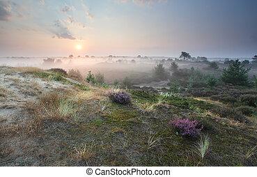 misty sunrise on dunes with heather