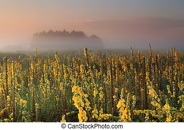 Misty sunrise on the field with yellow flowers
