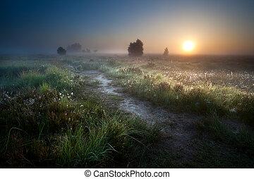misty sunrise over countryside path