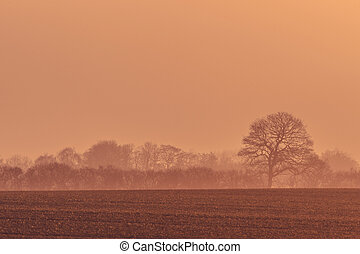 Misty sunrise with trees on a field
