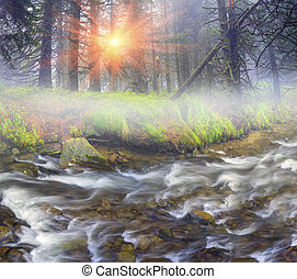 Misty thicket - Fast flow breakers among wild forest at...