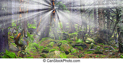 Misty thicket