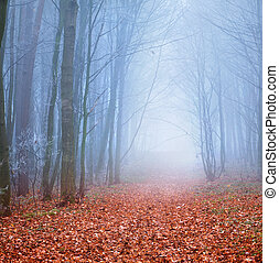 Misty trail in autumn forest