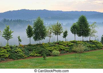 Misty tree on the mountain slope