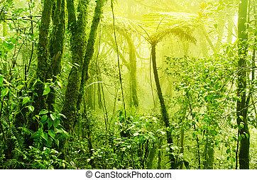 Misty tropical green mossy rainforest