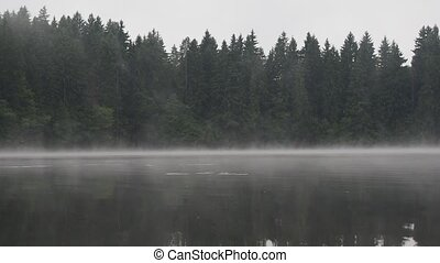 misty waters of wild forest lake by cold morning