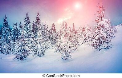 Misty winter scene in the snowy mountain forest