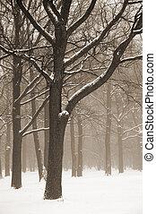 Misty winter trees landscape. Sepia toned. Retro look
