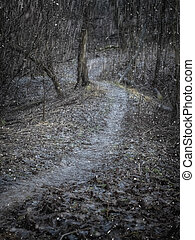 Misty winter winding path in the deep forest.