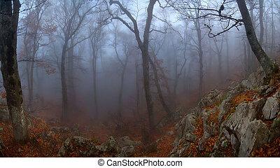 Misty wood in autumn