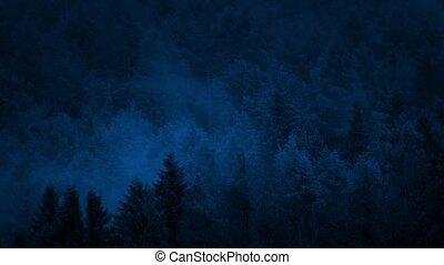 Misty Woods At Night