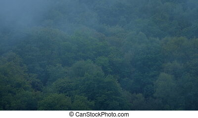 Misty Woods In The Evening - Dense forest trees with mist...