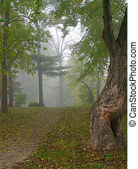 misty#2 - different view of a foggy morning