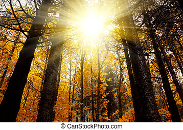 mistyczny, las