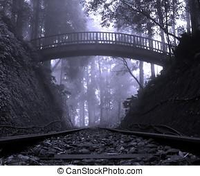 misztikus, erdő